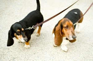 Richmond Dogs