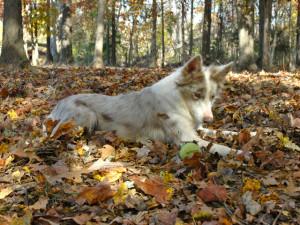 Richmond dog enjoying the Fall