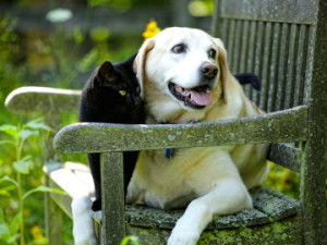 Richmond dog & Cat on bench