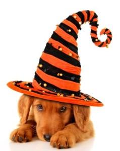 Richmond dog friendly Halloween