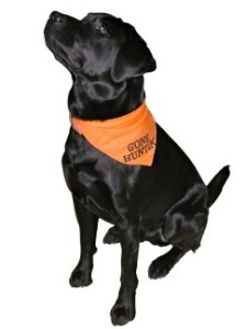 blaze orange dog2