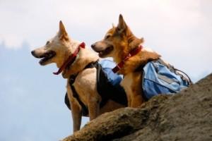 Richmond dogs hiking