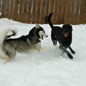 2-dogs-snow-814kb