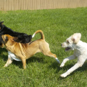 3-dog-chase-w-ball-3.15mb