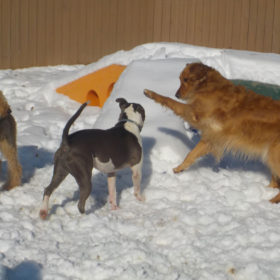 3-dog-play-snow-5.7mb