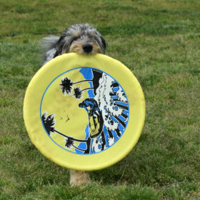 dog-w-big-frisbee-906kb