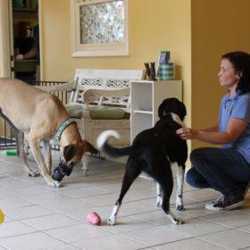 kongtime-Judy-&-2-dog.7