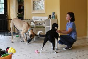 Dog Grooming In Hopewell Va