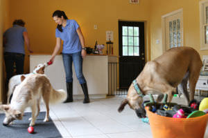 Dog Boarding Lodging And Training In Richmond Va