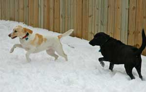 Dogs having fun in the snow