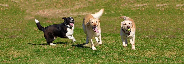 Dog Grooming Services Richmond Va