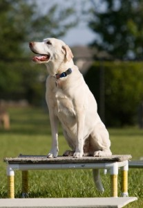 Dog Training Richmond VA